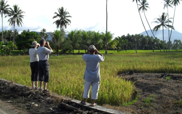 Birding on Rice Paddy