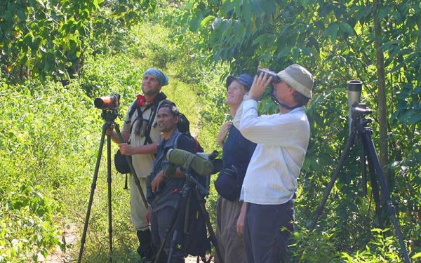 Ambon, Seram Island, and Halmahera Birding Tours (12 Days / 11 Nights)