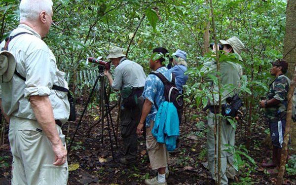 Birding Tangkoko and Gunung Mahawu Birdwatching Tours (6 Days / 5 Nights)