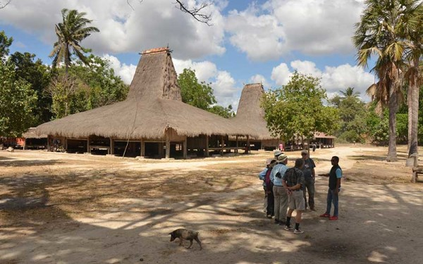 Culture Tours on Sumba and West Timor Islands included the Marapu and Boti Tribe  (8 Days / 7 Nights)