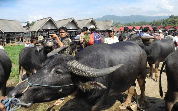 Trekking Tours on Tana Toraja and Lore Lindu National Park (9 Days / 8 Nights)