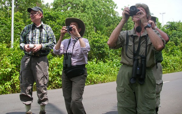Birdwatching Tours on Ambon, Buru, Yamdena, Tanimbar, Saumlaki, Kai Besar, Seram 22 Days / 21 Nights