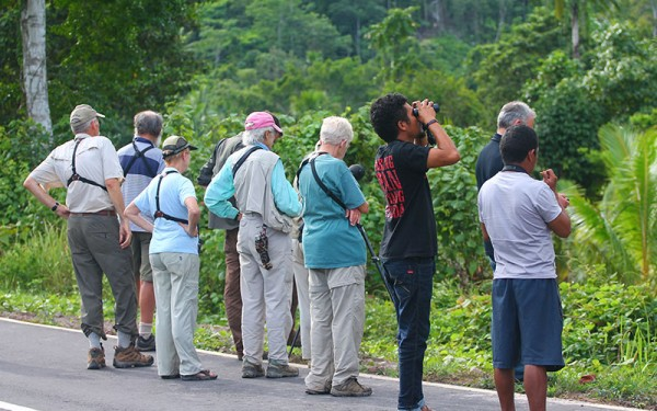 Birdwatching Tours on Halmahera Island incl. Gunung Uni uni, Foli, Kali Batu Putih, Tobelo and Galela (6 Days / 5 Nights)