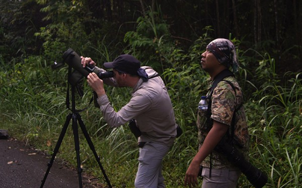 Sumatera The Leuser Ecosystem Rainforest