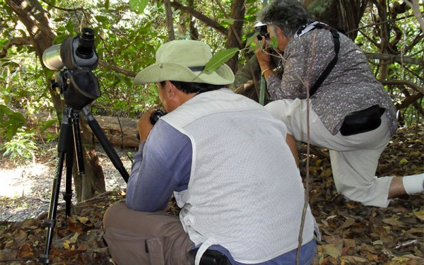Sorong and Waigeo Island Birding Tours (9 Days / 8 Nights)