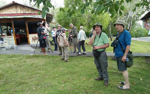 Birding-Tours-on-Sulawesi-Halmahera-and-West-Java-Birding-Tours-15