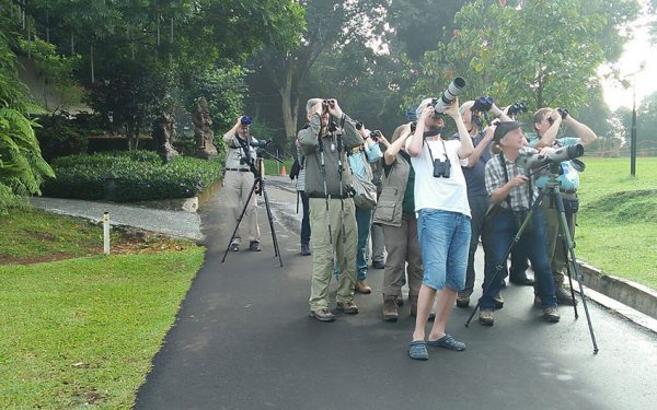 Birding-Tours-on-Sulawesi-Halmahera-and-West-Java-Birding-Tours-19