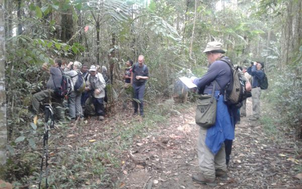 Birding-Tours-on-Sulawesi-Halmahera-and-West-Java-Birding-Tours-21