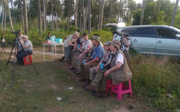Birding-Tours-on-Sulawesi-Halmahera-and-West-Java-Birding-Tours-29