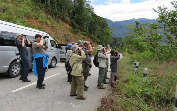 Birding-Tours-on-Sulawesi-Halmahera-and-West-Java-Birding-Tours-46