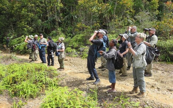 Birding-Tours-on-Sulawesi-Halmahera-and-West-Java-Birding-Tours-49