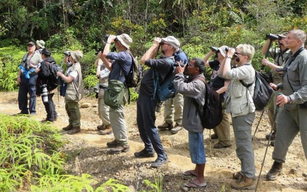 Birding-Tours-on-Sulawesi-Halmahera-and-West-Java-Birding-Tours-50