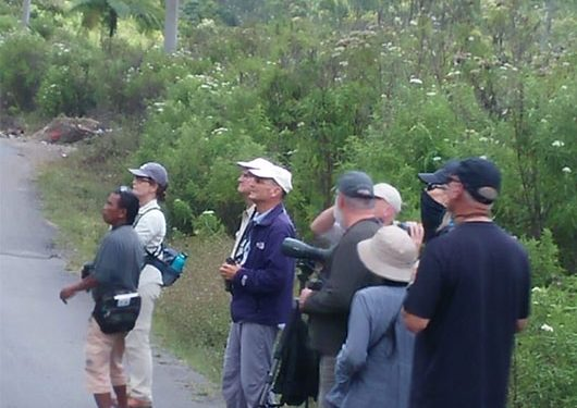 birding-tours-to-flores-komodo-island-west-bali-np-gunung-gede-pangrango-np-and-waykambas-national-park-11
