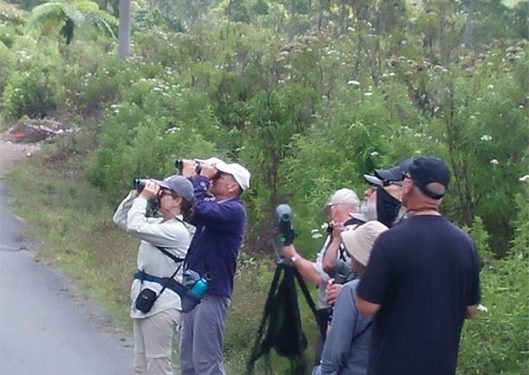 birding-tours-to-flores-komodo-island-west-bali-np-gunung-gede-pangrango-np-and-waykambas-national-park-12