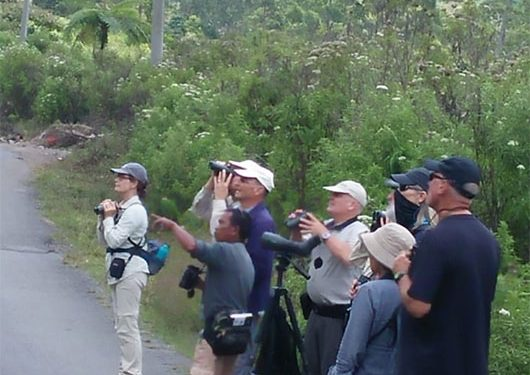 birding-tours-to-flores-komodo-island-west-bali-np-gunung-gede-pangrango-np-and-waykambas-national-park-13