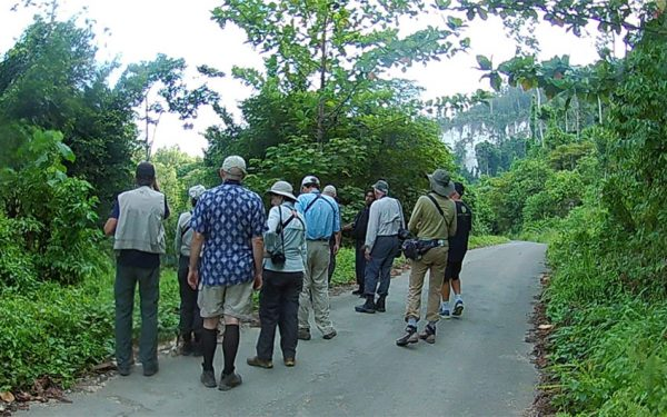 birding-tours-to-sulawesi-molucass-and-west-papua-04