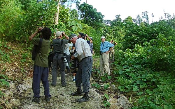 birding-tours-to-sulawesi-molucass-and-west-papua-06