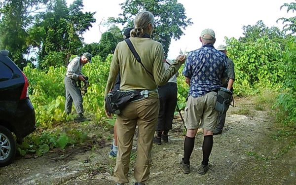 birding-tours-to-sulawesi-molucass-and-west-papua-07