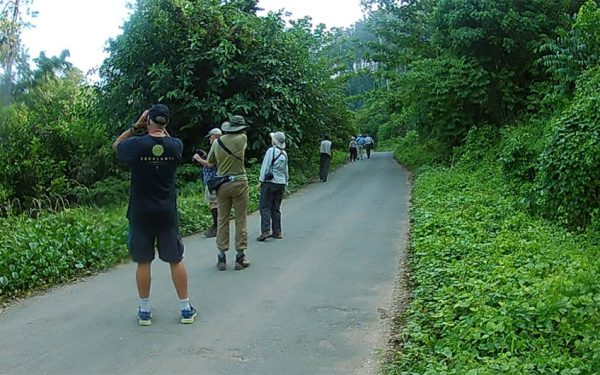 birding-tours-to-sulawesi-molucass-and-west-papua-08