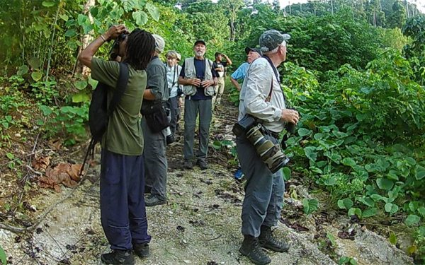 birding-tours-to-sulawesi-molucass-and-west-papua-10