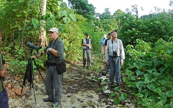 birding-tours-to-sulawesi-molucass-and-west-papua-11