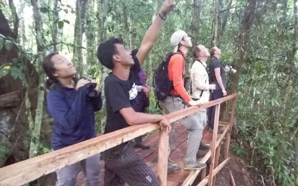 sulawesi-and-halmahera-birding-tours-included-rammang-rammang-river-and-karaenta-forest-in-the-makassar-area-06