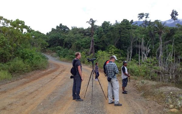 sulawesi-and-halmahera-birding-tours-included-rammang-rammang-river-and-karaenta-forest-in-the-makassar-area-17