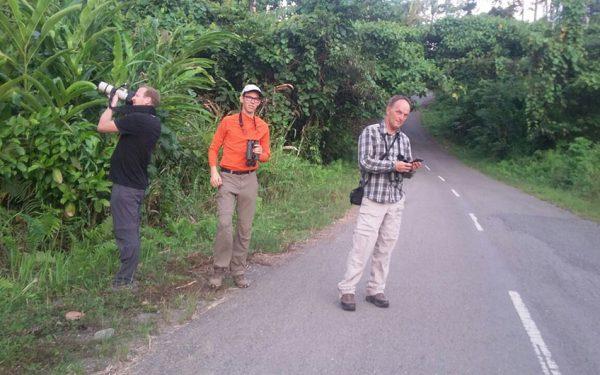 sulawesi-and-halmahera-birding-tours-included-rammang-rammang-river-and-karaenta-forest-in-the-makassar-area-22