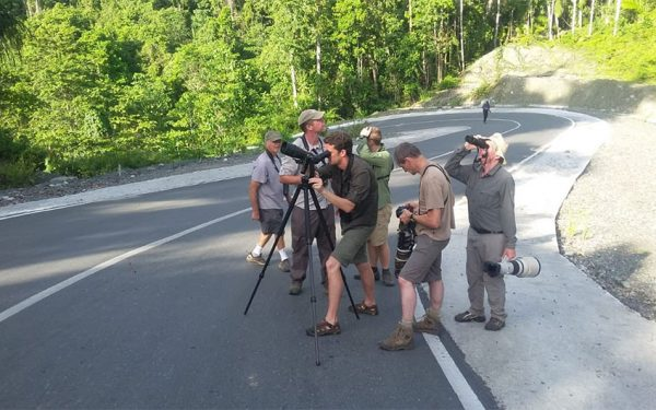 Sulawesi and Halmahera Birding Tours, the group succeed on seeing geomalia
