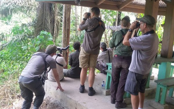 sulawesi-and-halmahera-birding-tours-the-group-succeed-on-seeing-geomalia-02
