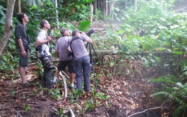 sulawesi-and-halmahera-birding-tours-the-group-succeed-on-seeing-geomalia-03
