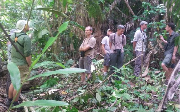 sulawesi-and-halmahera-birding-tours-the-group-succeed-on-seeing-geomalia-06