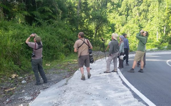 sulawesi-and-halmahera-birding-tours-the-group-succeed-on-seeing-geomalia-07
