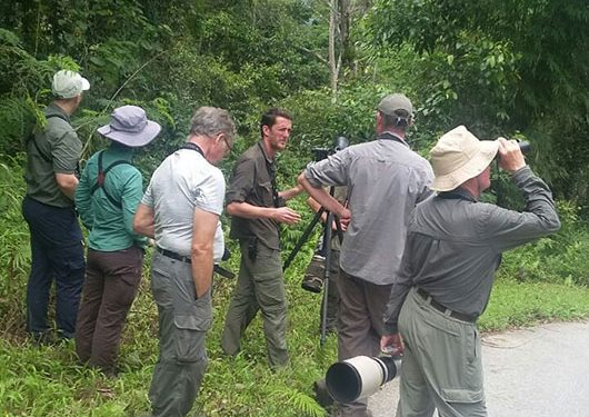 sulawesi-and-halmahera-birding-tours-the-group-succeed-on-seeing-geomalia-11