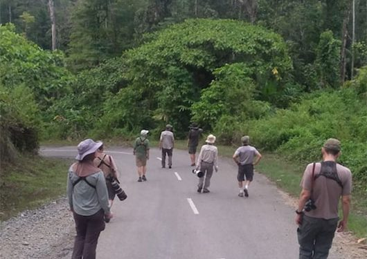 sulawesi-and-halmahera-birding-tours-the-group-succeed-on-seeing-geomalia-12