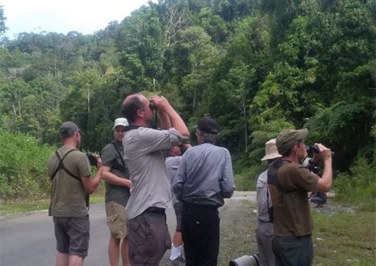 sulawesi-and-halmahera-birding-tours-the-group-succeed-on-seeing-geomalia-13