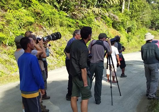 sulawesi-and-halmahera-birding-tours-the-group-succeed-on-seeing-geomalia-14