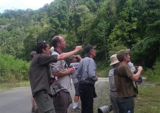 sulawesi-and-halmahera-birding-tours-the-group-succeed-on-seeing-geomalia-15