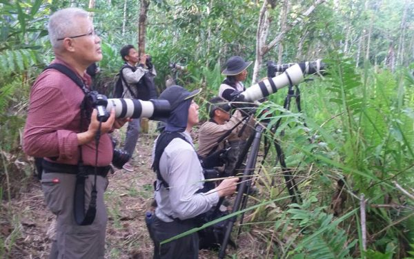 wildlife-photographic-and-filming-tours-to-papua-and-west-papua-the-land-of-bird-of-paradise-06