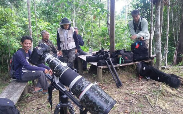 wildlife-photographic-and-filming-tours-to-papua-and-west-papua-the-land-of-bird-of-paradise-23