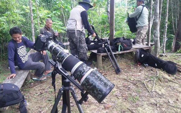 wildlife-photographic-and-filming-tours-to-papua-and-west-papua-the-land-of-bird-of-paradise-24