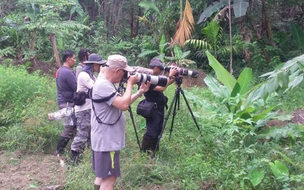 wildlife-photographic-and-filming-tours-to-papua-and-west-papua-the-land-of-bird-of-paradise-35
