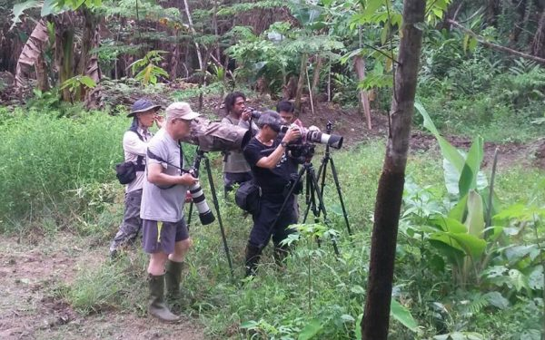 wildlife-photographic-and-filming-tours-to-papua-and-west-papua-the-land-of-bird-of-paradise-36