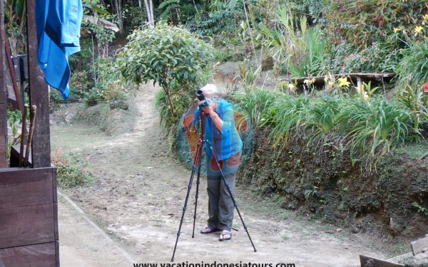 paige-harvey-and-bruce-harvey-to-west-papua-for-birding-tours-to-waigeo-island-and-arfak-mountain-on-manokwari-78