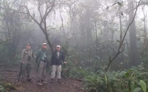 peter-roberts-birding-tours-to-gunung-gede-on-west-java-and-kerinci-seblat-national-park-includeded-tapan-road-on-jambi-and-the-waykambas-np-on-lampung-02
