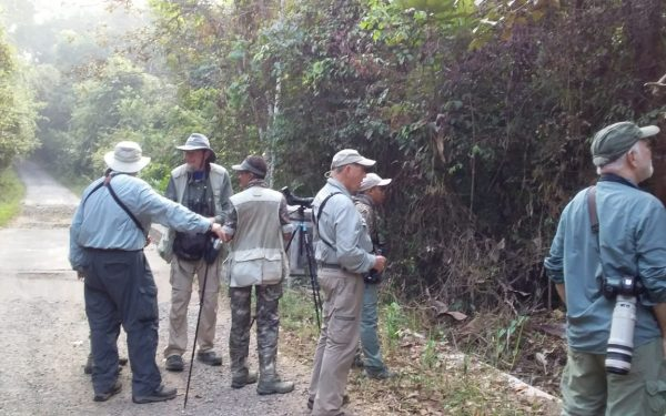peter-roberts-birding-tours-to-gunung-gede-on-west-java-and-kerinci-seblat-national-park-includeded-tapan-road-on-jambi-and-the-waykambas-np-on-lampung-05