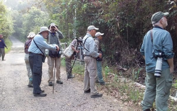 peter-roberts-birding-tours-to-gunung-gede-on-west-java-and-kerinci-seblat-national-park-includeded-tapan-road-on-jambi-and-the-waykambas-np-on-lampung-07