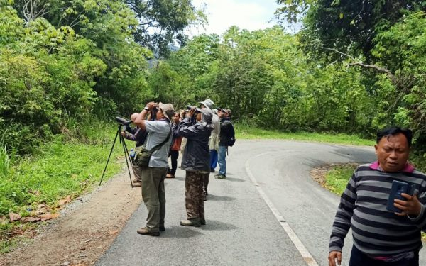 peter-roberts-birding-tours-to-gunung-gede-on-west-java-and-kerinci-seblat-national-park-includeded-tapan-road-on-jambi-and-the-waykambas-np-on-lampung-13
