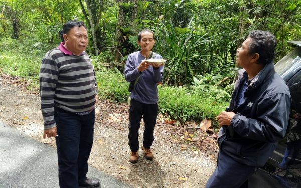 peter-roberts-birding-tours-to-gunung-gede-on-west-java-and-kerinci-seblat-national-park-includeded-tapan-road-on-jambi-and-the-waykambas-np-on-lampung-15
