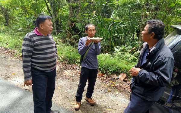 peter-roberts-birding-tours-to-gunung-gede-on-west-java-and-kerinci-seblat-national-park-includeded-tapan-road-on-jambi-and-the-waykambas-np-on-lampung-16
